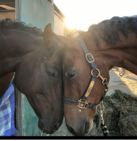 This is was what happened when these two beauties saw each other at the horse park after their long absence from each other. Photo courtesy of Amanda Fisher.: This is was what happened when these two beauties saw each other at the horse park after their long absence from each other. Photo courtesy of Amanda Fisher.
