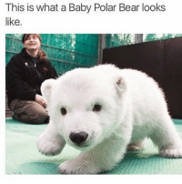 Cuteness Oveloaded 💕 ➡️ @ommy_007: This is what a Baby Polar Bear looks  like Cuteness Oveloaded 💕 ➡️ @ommy_007