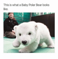 This is what a Baby Polar Bear looks  like So damn cute ❤️ iWant 😍 TAG someone who is cute 😘 ➡️ @ommy_007