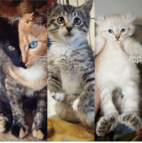Memes, Kittens, and 🤖: This is what a trio of perfectly imperfect kittens looks like. 😺 fbf My adopted brothers have their own accounts if you want to follow them. ❤️ @roothekangaroocat & @totally_tater differentisbeautiful kittens perfectlyimperfect adopted