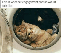 <p>Congratulations!!</p>: This is what cat engagement photos would  look like <p>Congratulations!!</p>