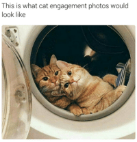 What Cat: This is what cat engagement photos would  look like