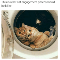 Aww :): This is what cat engagement photos would  look like Aww :)