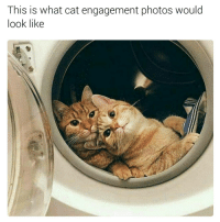 I loved it (@hilarious.ted): This is what cat engagement photos would  look like I loved it (@hilarious.ted)