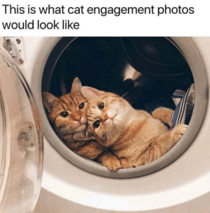 The cat's meow: This is what cat engagement photos  would look like The cat's meow