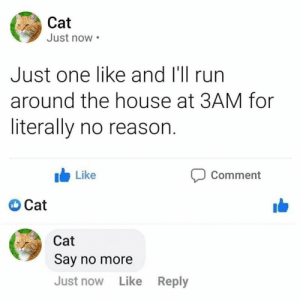 This is what cat parents have to deal with on a nightly basis. #Cats #Memes #Animals: This is what cat parents have to deal with on a nightly basis. #Cats #Memes #Animals