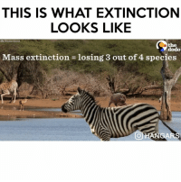 Fashion, Food, and Memes: THIS IS WHAT EXTINCTION  LOOKS LIKE  Shutterstock  the  dodo  Mass extinction losing 3 out of 4 species  OHANSARS Follow me (@hangars) for more! 💕 - - - love instagood photooftheday tbt beautiful cute happy fashion followme me follow selfie like4like picoftheday summer friends instadaily girl fun smile repost tagsforlikes art instalike food igers nature style family likeforlike