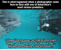 "Complex, Facebook, and Facts: This is what happened when a photographer came  face-to-face with one of Antarctica's  most vicious predators.  slipped into the water, terrified of what might  happen, and swam up to this leopard Sea  My legs were shaking, I had dry mouth What Paul Nicklen had to say about these picture:  ""The only thing that needs to be changed in that post is that a leopard seal is not one of Antarctica's most vicious predators. A leopard seal is a just another animal that is part of a complex ecosystem who is trying to survive. Leopard seals eat penguins and penguins eat krill. Penguins are not listed as vicious. Unfortunately, we are the only predator who is truly vicious.""   Paul Nicklen's page https://www.facebook.com/Paul-Nicklen-Photography-128942563363/  ~Weirdest Facts Admin"