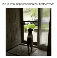 Memes, Animal, and Best: This is what happens when her brother visits That is one happy doggo!   Follow @cuteandfuzzybunch 👈 for the best animal memes!