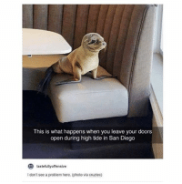 Memes, San Diego, and 🤖: This is what happens when you leave your doors  open during high tide in San Diego  tastefullyoffensive  to  I don't see a problem here. (photo via cruztec) what kind of dog is this