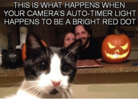 Grumpy Cat, Camera, and Reds: THIS IS WHAT HAPPENS WHEN  YOUR CAMERAS AUTO-TIMER LIGHT  HAPPENS TO BE A BRIGHT RED DOT