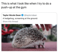 Memes, Hedgehog, and 🤖: This is what l look like when l try to do a  push-up at the gynm  Taylor Nicole Dean@taylorndean  A hedgehog, screaming at the ground:  Show this thread do I have gains yet?