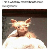 Memes, 🤖, and Yes: This is what my mental health looks  like right now Yes 😂