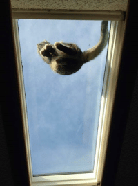 This is what you see when you have a skylight, and a cat: This is what you see when you have a skylight, and a cat