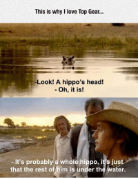 """Club, Head, and Love: This is why I love Top Gear.  -Look! A hippo's head!  - Oh, it is!  -It's probably a whole hippo, it's just  that the rest offhim is under the water. <p><a href=""""http://laughoutloud-club.tumblr.com/post/172128806821/hippos-head"""" class=""""tumblr_blog"""">laughoutloud-club</a>:</p>  <blockquote><p>Hippo's Head</p></blockquote>"""