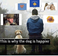 Dog, Why, and The Dog: This is why the dog is happier https://t.co/bvadFrBgZd