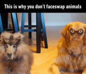 Animals, Don, and Why: This is Why you don t faceswap animals