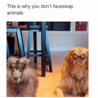 """Animals, Memes, and Http: This is why you don't faceswap  animals <p>When technology goes too far: via /r/memes <a href=""""http://ift.tt/2zaybiP"""">http://ift.tt/2zaybiP</a></p>"""