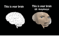 This is your brain  This is your brain  on maymays