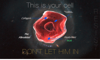"<p>[<a href=""https://www.reddit.com/r/surrealmemes/comments/8bkf7u/this_is_your_last_refuge/"">Src</a>]</p>: This is your cel  Collagen  SI  The  Fibroblast  Hyaluronic  Acid  DONT LET HIM IN <p>[<a href=""https://www.reddit.com/r/surrealmemes/comments/8bkf7u/this_is_your_last_refuge/"">Src</a>]</p>"