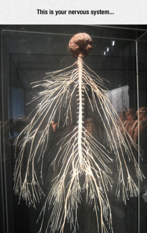 Club, Tumblr, and Blog: This is your nervous system.. laughoutloud-club:  The Amazing Nervous System