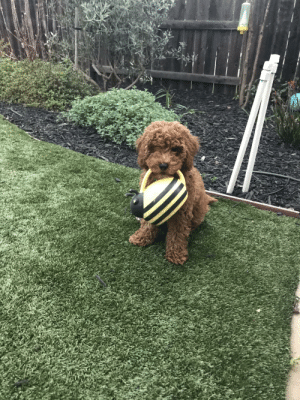 This is Ziggy. Ziggy has decided to take up gardening to ease the angst of our uncertain times :): This is Ziggy. Ziggy has decided to take up gardening to ease the angst of our uncertain times :)