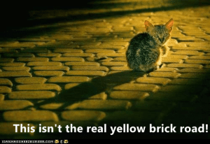 brick: This isn't the real yellow brick road!  CANHASCHEE2EURGER cOM