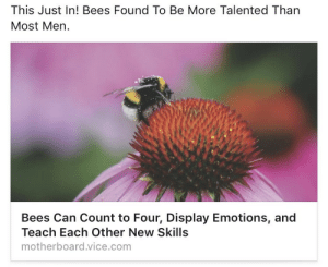 Beese: This Just In! Bees Found To Be More Talented Than  Most Men.  Bees Can Count to Four, Display Emotions, and  Teach Each Other New Skills  motherboard.vice.com