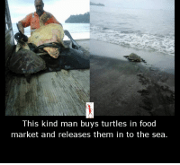 Memes, Turtle, and 🤖: This kind man buys turtles in food  market and releases them in to the sea.