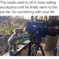 Life, Memes, and Trees: This koala used to sit in trees eating  eucalyptus until he finally went to the  job fair. Do something with your life