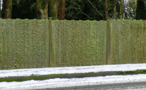 Moss, Lichen, and Made: This lichen and moss fence made with some wood