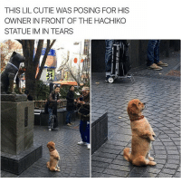 Memes, 🤖, and Hachiko: THIS LIL CUTIE WAS POSING FOR HIS  OWNER IN FRONT OF THE HACHIKO  STATUE IM IN TEARS Yass I'm in tears 😍😭