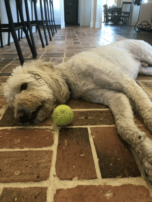 This (little) guy is all tuckered out after chasing away those conspiring squirrels outside.: This (little) guy is all tuckered out after chasing away those conspiring squirrels outside.