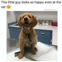 "Af, Ass, and Bad: This little guy looks so happy even at the  vet  @Drsmashlove (@tinderonians) Me AF when I'm in an exam room and in comes a fine ass lil nurse with her hair dyed red and aggressive forearm tats that indicate a difficult past - examples: ""Only God Can Judge Me"" and-or ""Chosen One"" - chosen for what? Chosen because u got that bomb Punani? Chosen because you've been chosen to make me undress and examine my testes so u can give me that sexy little smirk and then ask about my medical history while I see that steel tongue stud flap about delicately, clicking against your teeth? Don't mind the throbbing boner under my smock baby I'm like a bad 13 year old and a sexy woman in hospital scrubs with her hair in a tight, wet bun (because it's still wet from that morning's shower) gon get me every. Damn. Time 😍 HitMe TestMyReflexes StabMeWithNeedles InspectMe MyBodyIsReadyAF 😍😂😂😂"