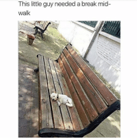 Memes, Animal, and Break: This little guy needed a break mid-  walk @teamnobadtimes gets me in the feels with the animal memes 💯😍💕🙋🏽LOOK AT THIS GUYYYYY