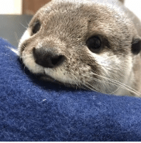 Dank, Monday, and 🤖: This little otter is enough to brighten up anyone's Monday! 😍