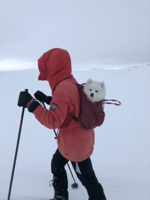 This little puppy got tired while skiing💤: This little puppy got tired while skiing💤