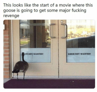 Fucking, Revenge, and Movie: This looks like the start of a movie where this  goose is going to get some major fucking  revenge  SE NOT WANTEDt  GEESE NOT WANTED