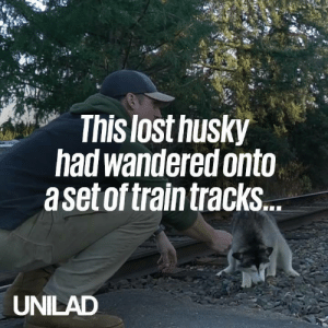 This guy found a lost husky scared & alone on rail tracks and decided to make it his mission to return him to its owners! ❤️: This lost husky  had wandered onto  aset of train tracks  UNILAD This guy found a lost husky scared & alone on rail tracks and decided to make it his mission to return him to its owners! ❤️