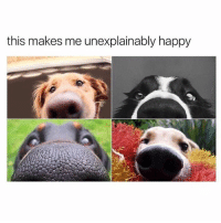 Funny, Ted, and Happy: this makes me unexplainably happy Wanna boop them all (@hilarious.ted)