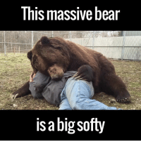 Dank, 🤖, and Big: This massive bear  is a big softy This is Jim and Jimbo. They are best friends. And I cannot deal with this video!    Support orphaned animals and donate to Orphaned Wildlife Center here: http://bit.ly/1WQPpX7