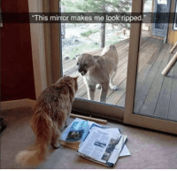 """Cute, Memes, and Animal: This mirror makes me look ripped."""" 42 Hilarious Animal Memes That Are So Cute You're Gonna Die #CuteAnimals #DogMemes #CatMemes"""