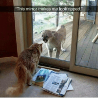 """Memes, 🤖, and Weeds: """"This mirror makes me look ripped."""" Awe Kitty kitter Ha ha. I'm weak flatlined dead pettypost nochill teamnoharmdone noharmdone dogs cat vape fitspiration funnymemes savage savagememes dankmemes gymmotivation fitnessmotivation weed weedhumor hollywood celebrity fashion model college fail"""
