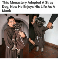 His little robe lmao *SWIPE ➡ *   For more @aranjevi: This Monastery Adopted A Stray  Dog, Now He Enjoys His Life As A  Monk His little robe lmao *SWIPE ➡ *   For more @aranjevi