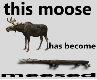 "<p>[<a href=""https://www.reddit.com/r/surrealmemes/comments/84az7e/please_be_cautious_no_touch_only_l00k/"">Src</a>]</p>: this moose  has become <p>[<a href=""https://www.reddit.com/r/surrealmemes/comments/84az7e/please_be_cautious_no_touch_only_l00k/"">Src</a>]</p>"