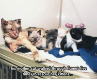 srsfunny:  This Mom Is A True Hero: This mother cat walked throuahflames five  times to rescue her kittens... srsfunny:  This Mom Is A True Hero