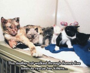 lolzandtrollz:  This One Deserves So Much Love: This mother cat walked through flames five  fimes to rescue her kittens.. lolzandtrollz:  This One Deserves So Much Love