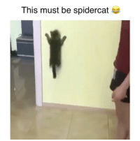 Memes, 🤖, and This: This must be spidercat * Nothing to see, just a casual spidercat 😂 Credit: @slonsiberian