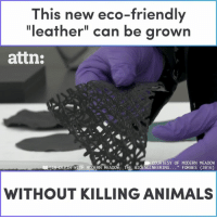 "This new ""leather"" can be grown without killing animals.: This new eco-friendly  ""leather"" can be grown  attn:  COURTESY OF MODERN MEADOW  WITH MODERN MEADOW: THE BIOENGINEERING. . ""FORBES (2016)  WITHOUT KILLING ANIMALS This new ""leather"" can be grown without killing animals."