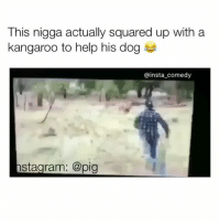This nigga actually squared up with a  kangaroo to help his dog  insta comedy  stagram: @pig breh this nigga buggin fr 😂 also follow my snapchat: jamjarface for uncensored memes and videos 🚫18+